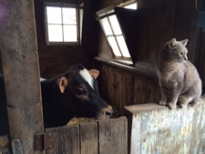 Calf and Cat