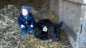 Nathan with calf