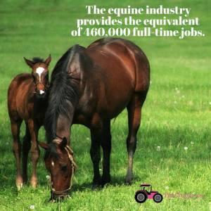Equine Industry