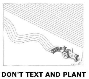 Text and Plant