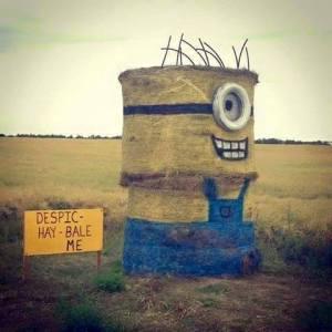 Despic-hay-bale